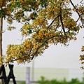 台南景點-百年魚木-13.jpg