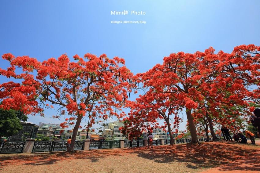 台南景點-安億橋鳳凰花-2.jpg