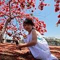 台南景點-安億橋鳳凰花-16.jpg