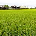 台南景點-柳營小旅行-2.jpg