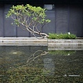 大溪老茶廠-21.jpg