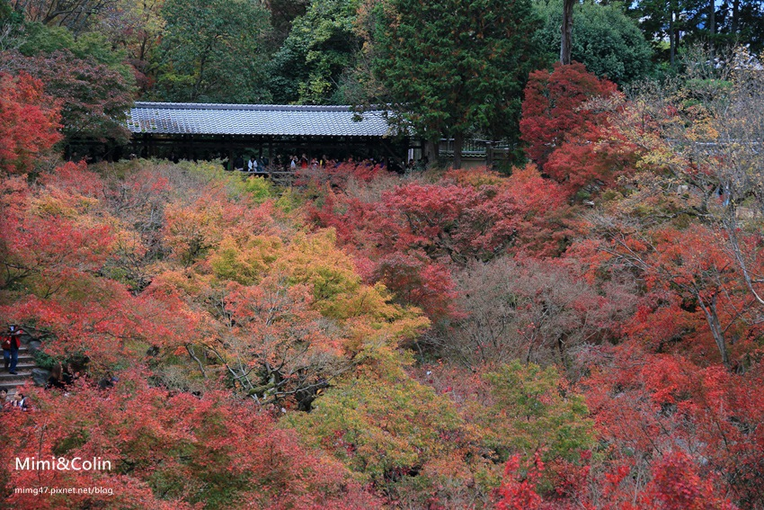 東福寺-1.jpg