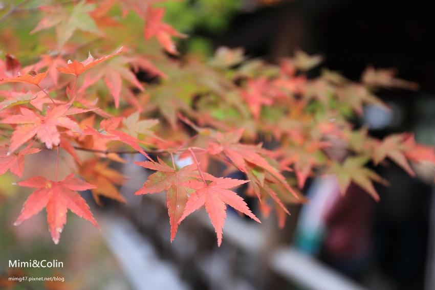 東福寺-20.jpg