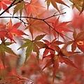 東福寺-26.jpg
