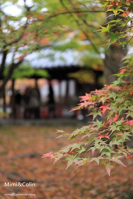 東福寺-29.jpg