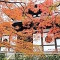 東福寺-25.jpg