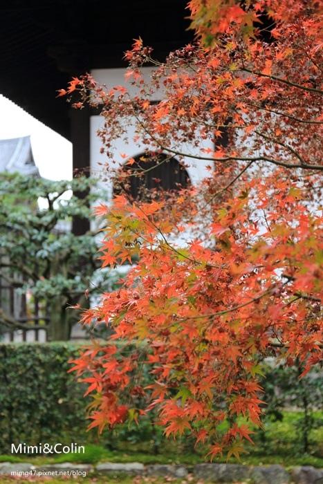 東福寺-28.jpg