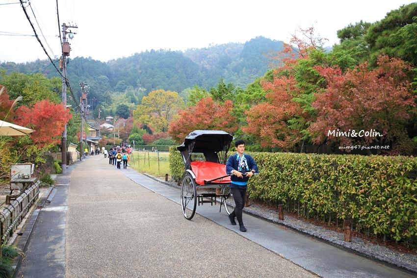 京都嵐山楓葉-2.jpg