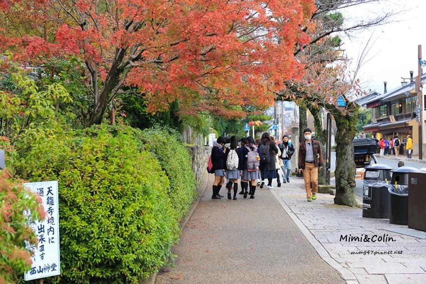 京都嵐山楓葉-14.jpg