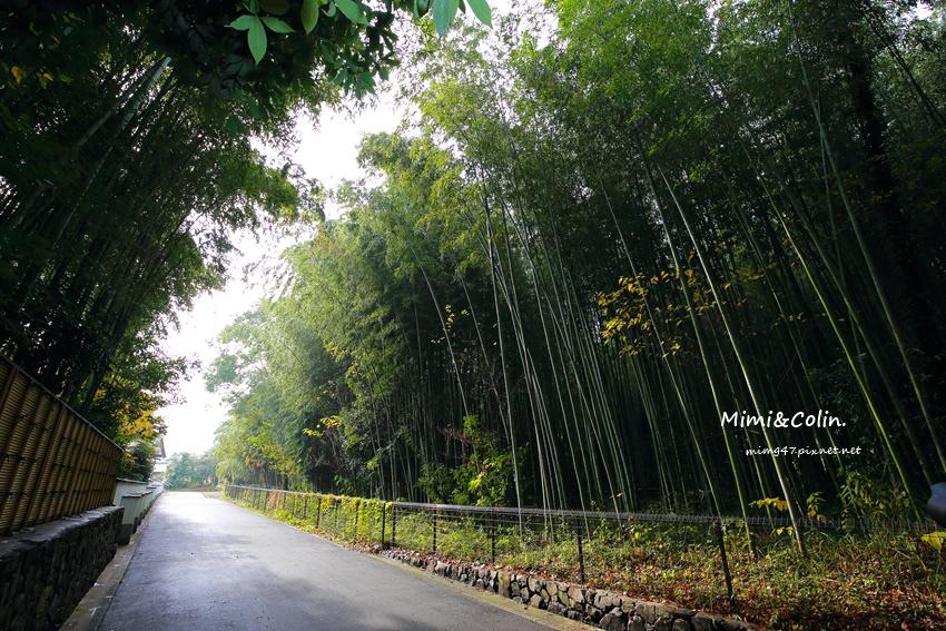 京都嵐山楓葉-20.jpg