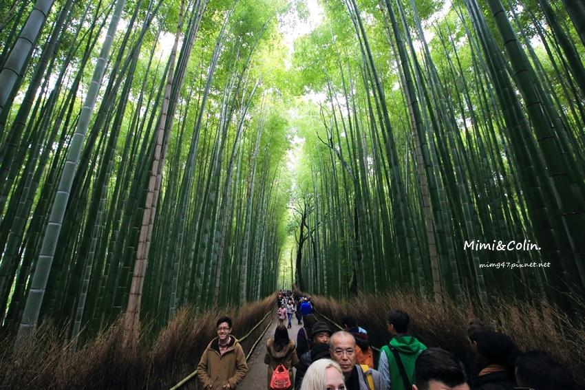 京都嵐山楓葉-21.jpg