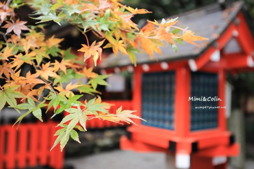 京都嵐山楓葉-27.jpg
