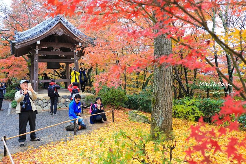 京都嵐山楓葉-40.jpg
