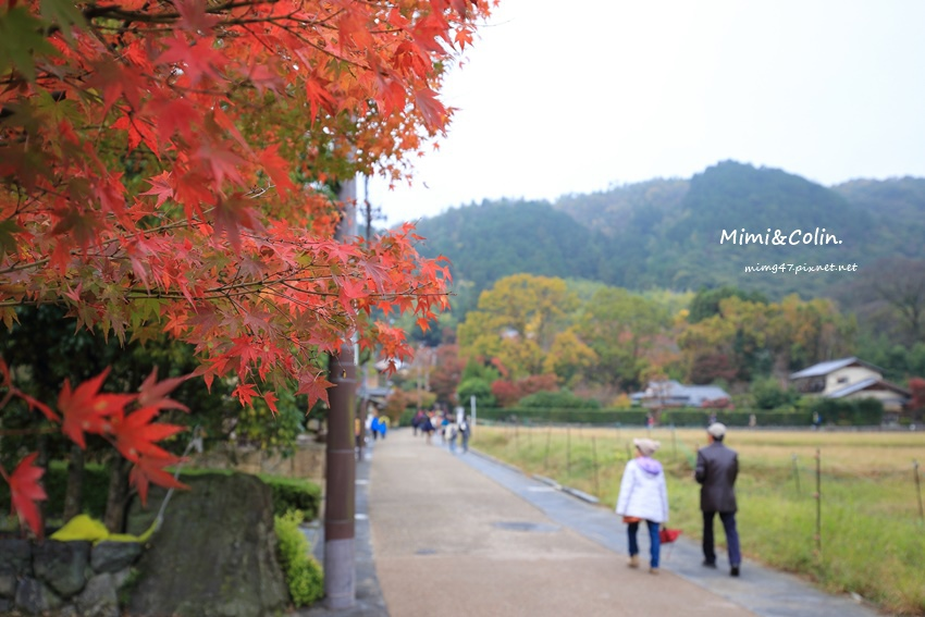京都嵐山楓葉-37.jpg