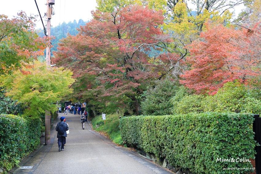 京都嵐山楓葉-38.jpg