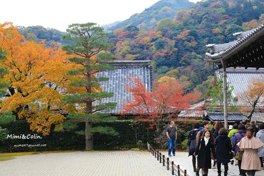 京都嵐山楓葉-42.jpg