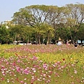 台南百花祭2016-27.jpg