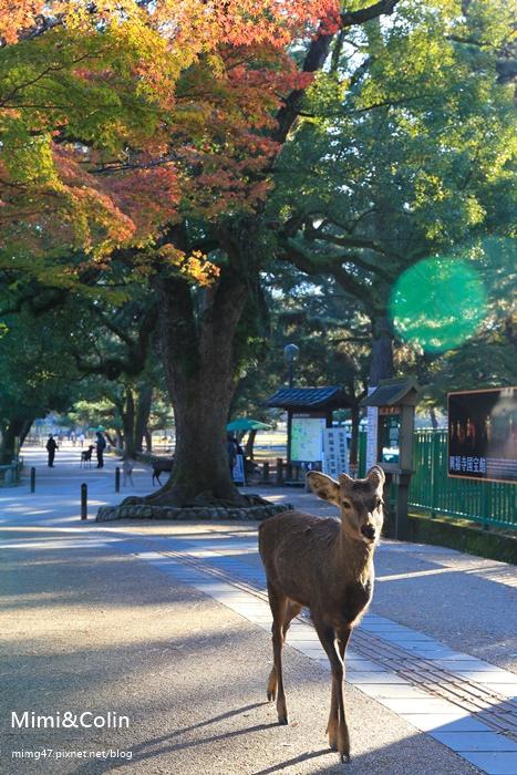 奈良東大寺-9.jpg