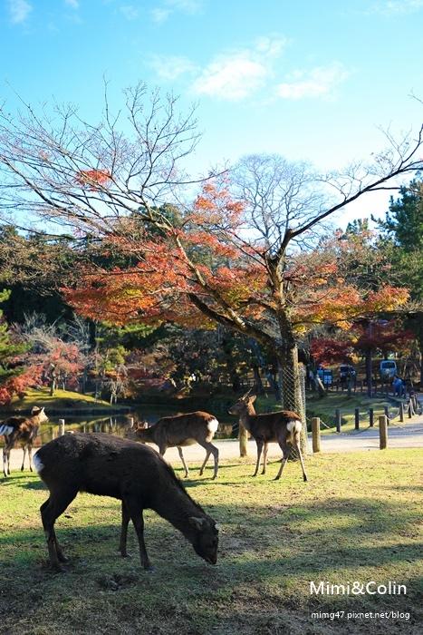 奈良東大寺-23.jpg