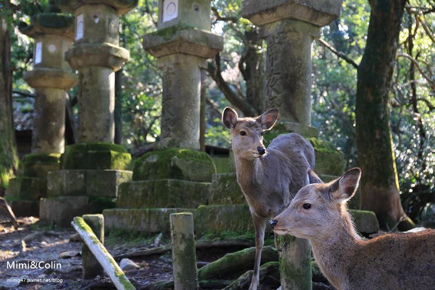 奈良東大寺-38.jpg