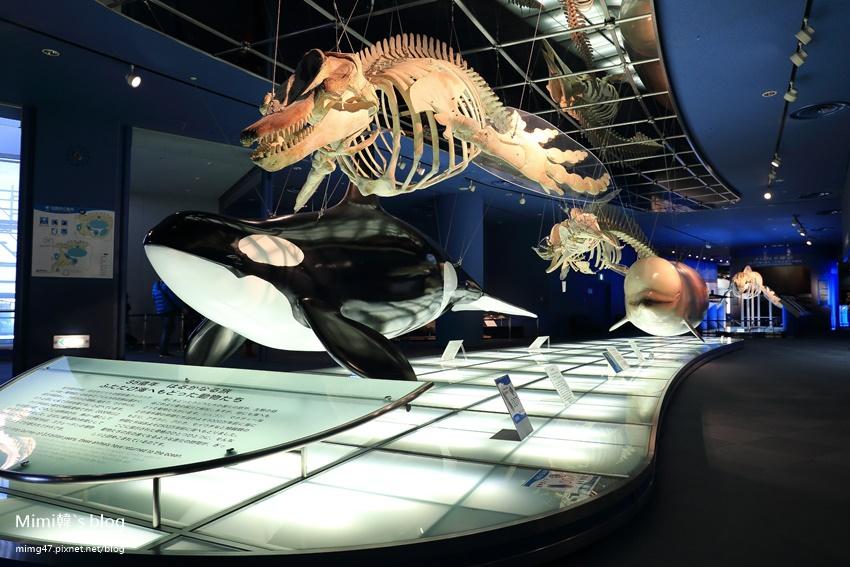 名古屋水族館-16.jpg