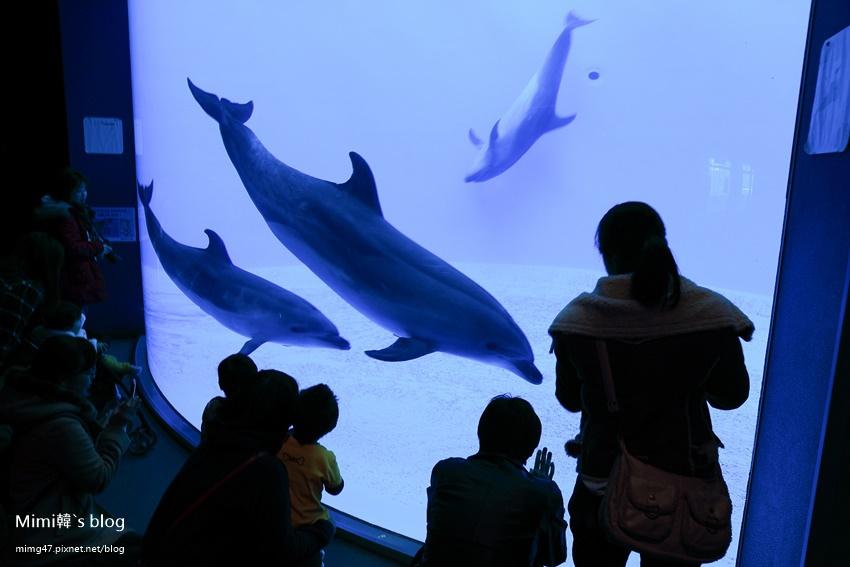 名古屋水族館-15.jpg