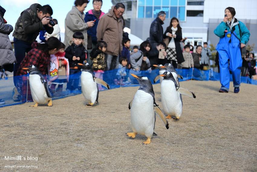 名古屋水族館-26.jpg