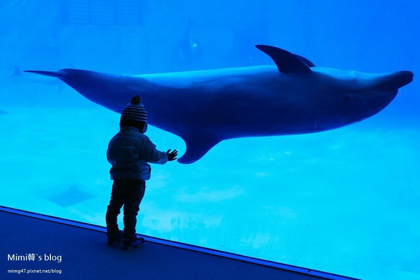 名古屋水族館-33.jpg