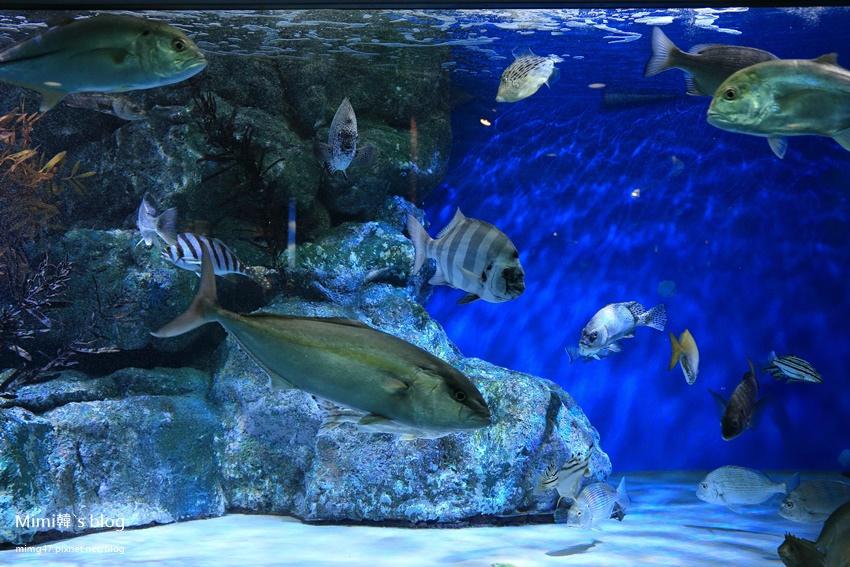 名古屋水族館-39.jpg