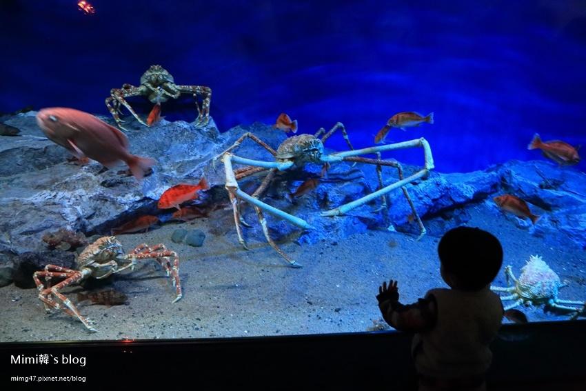 名古屋水族館-42.jpg