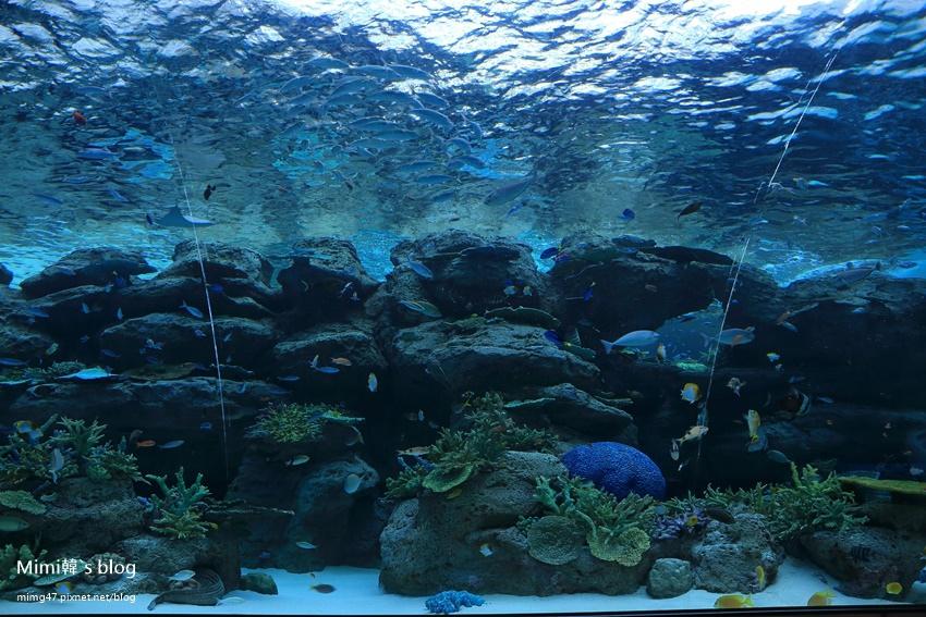 名古屋水族館-44.jpg