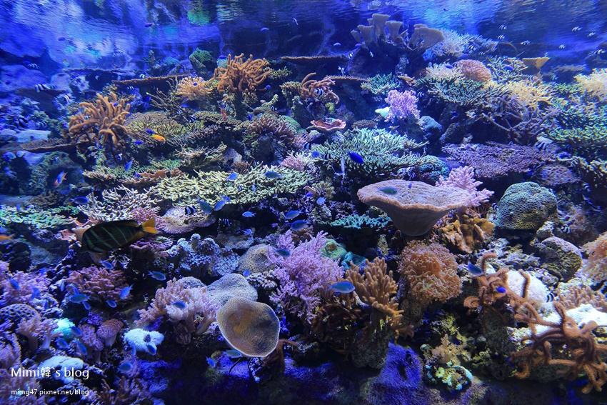 名古屋水族館-46.jpg