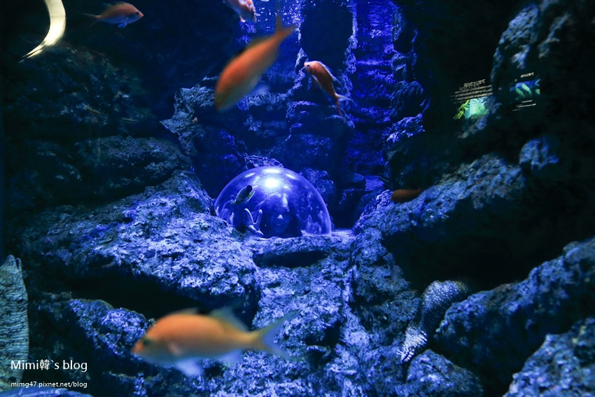 名古屋水族館-41.jpg
