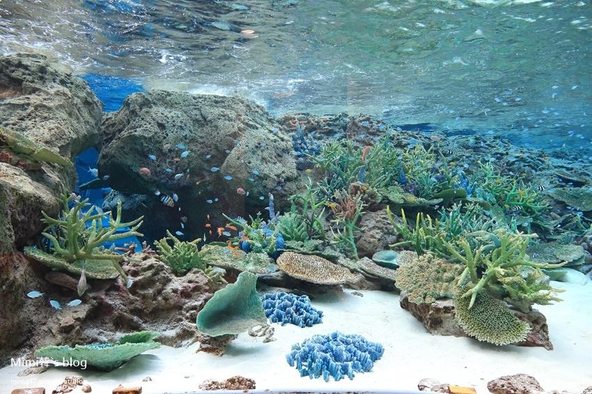 名古屋水族館-47.jpg