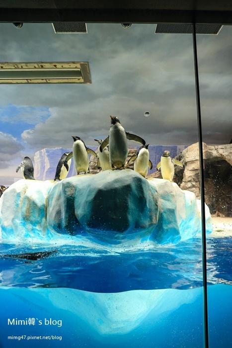 名古屋水族館-51.jpg