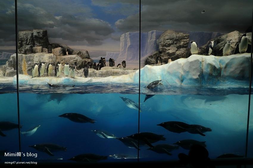 名古屋水族館-50.jpg