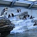 池袋太陽城水族館-19.jpg
