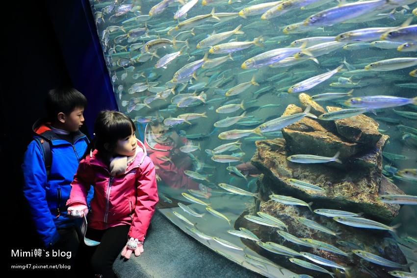 池袋太陽城水族館-23.jpg