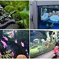 池袋太陽城水族館-21.jpg