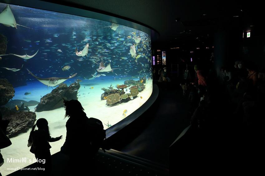 池袋太陽城水族館-26.jpg