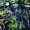 池袋太陽城水族館-27.jpg