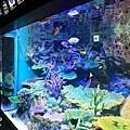 池袋太陽城水族館-29.jpg