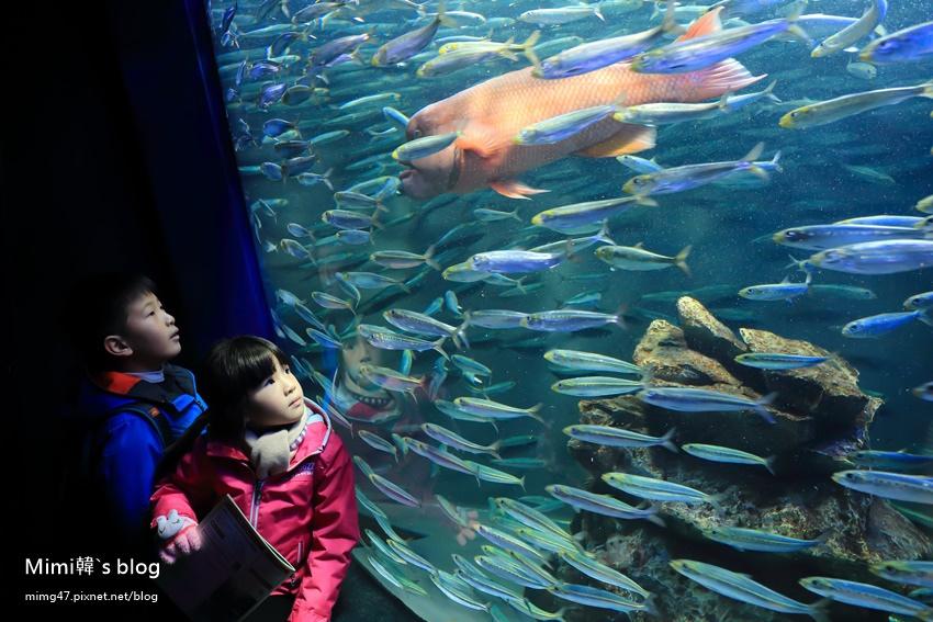 池袋太陽城水族館-24.jpg