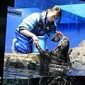 池袋太陽城水族館-31.jpg