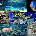 池袋太陽城水族館-30.jpg