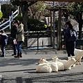 荒川遊園地-26.jpg