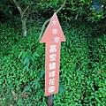 竹子湖繡球花-3.jpg