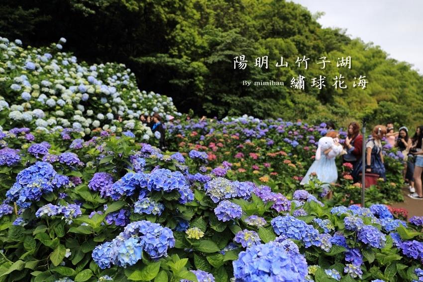 竹子湖繡球花-1.jpg