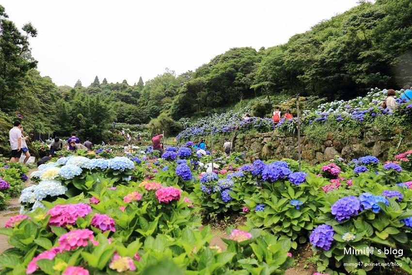 竹子湖繡球花-9.jpg