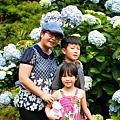 竹子湖繡球花-16.jpg